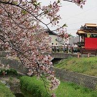 お祭りの山車と桜