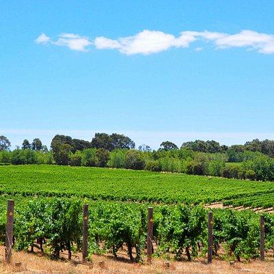 Deep Woods Estate Winery