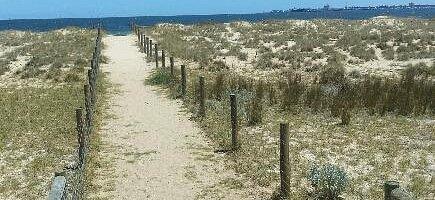 Albert Park Beach Preservation