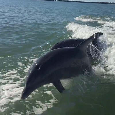 More Playful dolphins
