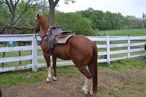 New Creations Farm Horseback Trail Rides