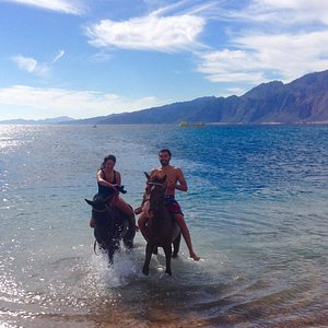 Belal and Aisha swimming with horses in Laguna