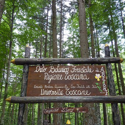 Orto botanico Forestale - Abetone  tra alti faggi