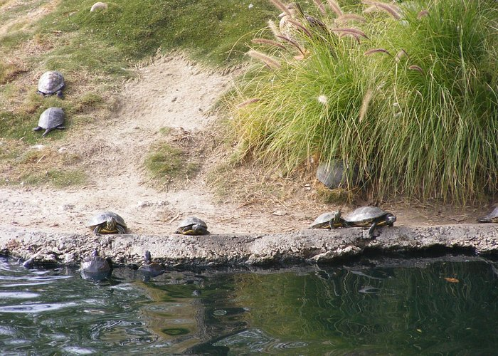 """All these little turtles were all over the small """"island"""""""