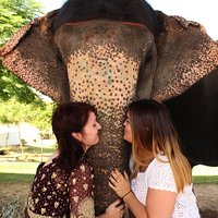 This is elephant love