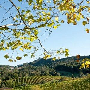 Quinta de Sant'Ana - The views