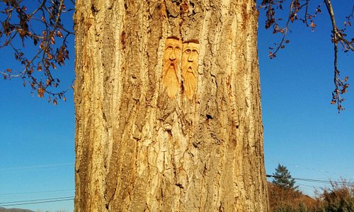 Art in the trees