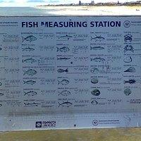 Fish Measuring Station
