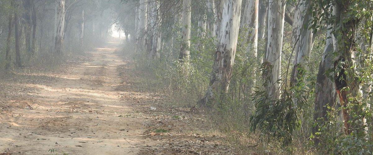 Jungle trackt at Bhindawas Bird Sanctuary