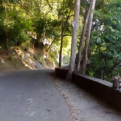 Paved road circling the park