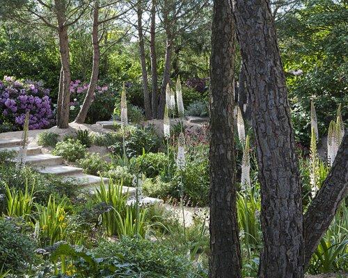 Jardin Agapanthe - Alexandre Thomas Architecte Paysagiste