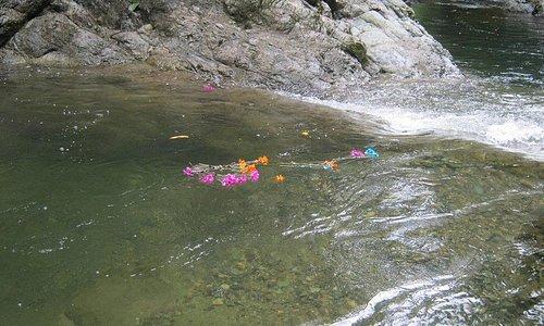 Homenaje al agua de La Cristalina con flores