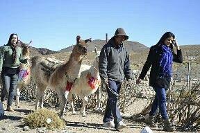 ANATOLIO Y SUS LLAMAS Caminamos con la conpania de ellas para conoser la vida de los viajero de