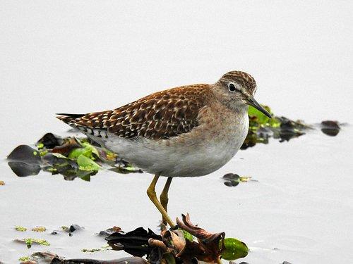 Bird at Basai wetlands