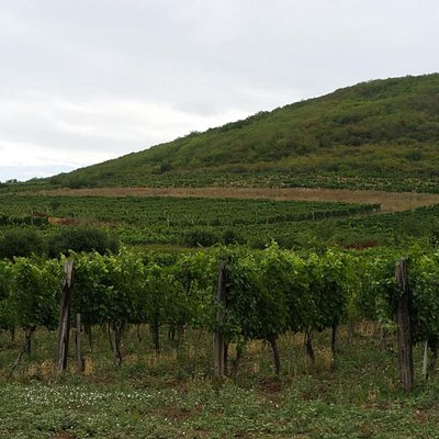 Tokaj wineyards north of the village
