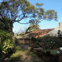 RESTAURANTE MONTEIRO MOR;HOTHOUSE PLANT PROPAGATION