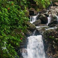 Cascade & Tropical Wildflowers