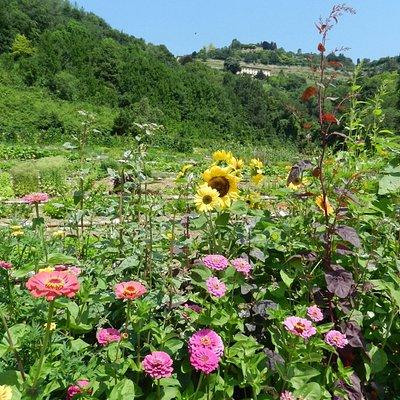 Valle della Biodiversità - Sezione di Astino