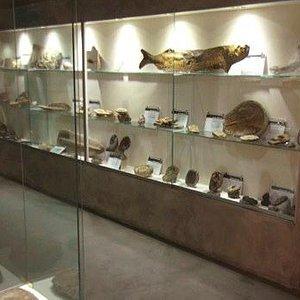 Sala de fósiles del museo