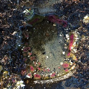 Sea anemone in winter