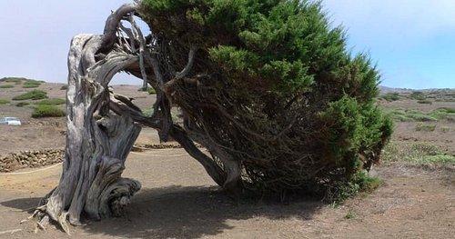 Sabina que representa el efecto continuado del viento