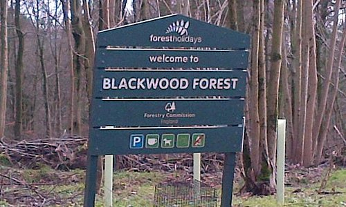 Blackwood forest