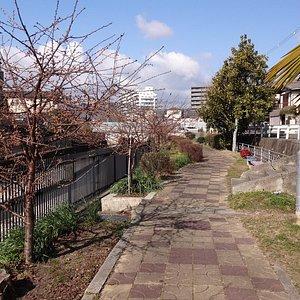 H29.29.9.淀緑地(淀水路沿い)の河津桜並木