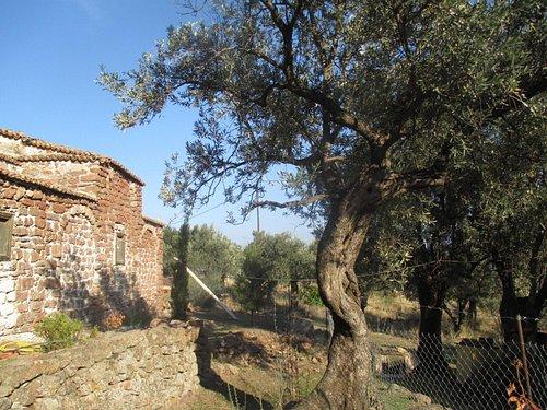 Die älteste Kirche auf Lesvos wird im Moment Total revidiert! Januar 2016