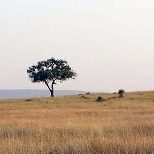 Experience Africa Balloon Safaris with Roaming Africa Tours and Safaris