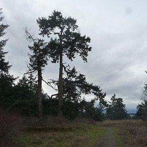 more trails.