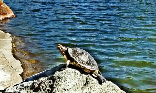 turtle catching some sun