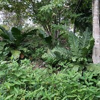 Vegetation at secound mound