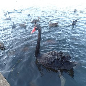 Some of the birds at Lake Eden.