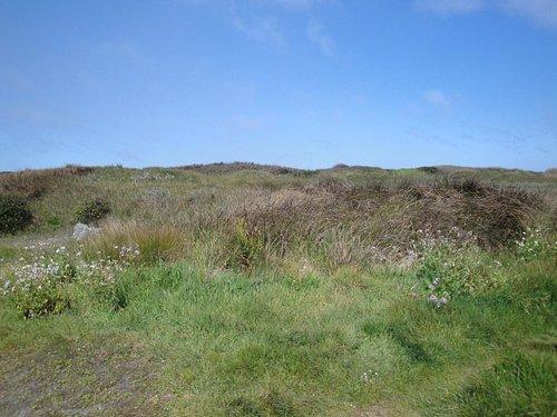 Wildflowers in the dunes.