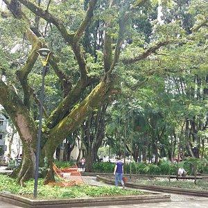 Vegetação antiga na Praça