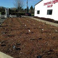Memorial Rose Garden in front of the Post