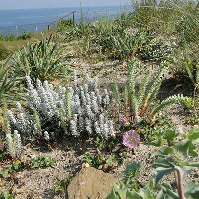 Dune blanche - Jardin botanique de Saint-Jean-de-Luz