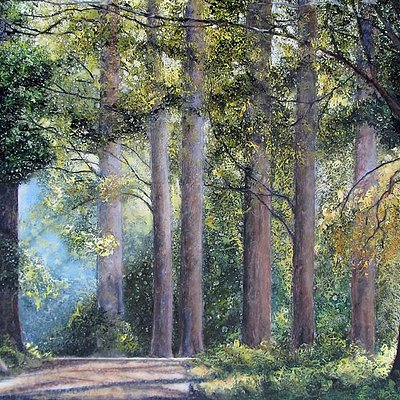 """""""The Old Woods"""""""