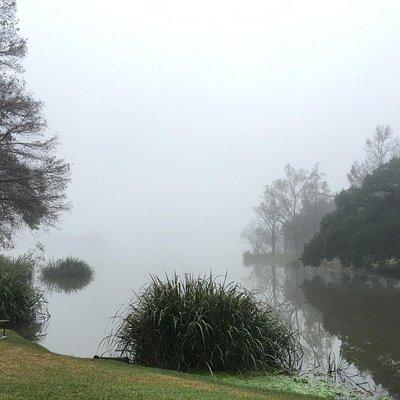 Foggy Morning on University Lake
