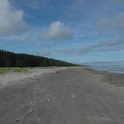 Here's the wide beach with the wonderful pines bordering the beach