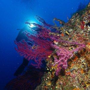 Traumhafte Unterwasserwelt vor Elba betaucht mit Unica Diving Elba