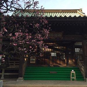 本堂と梅の花