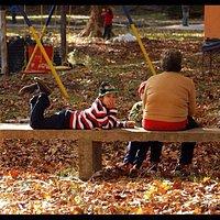 otoño en Cofuesa, los colores más lindos de Salto!