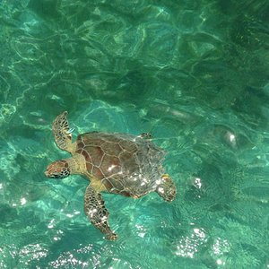 Pic of this amazing sea turtle I took with my cell phone while on tour with Alberto!!!