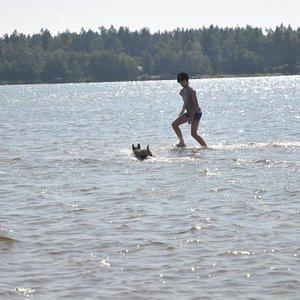 Dog enjoys summer