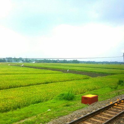 Rice Plantation Lanscape tooken from the Train