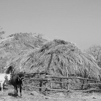 Farms at janapav