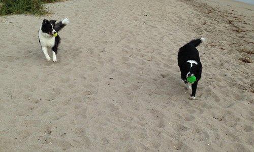 The furry kids having a blast at the beach!