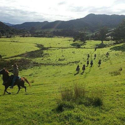 Galloping up the grassy foothills