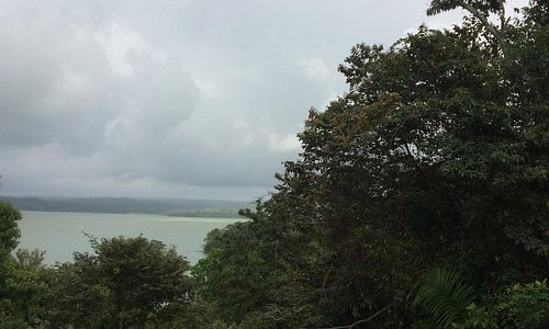 View from the STRI into Gatun Lake